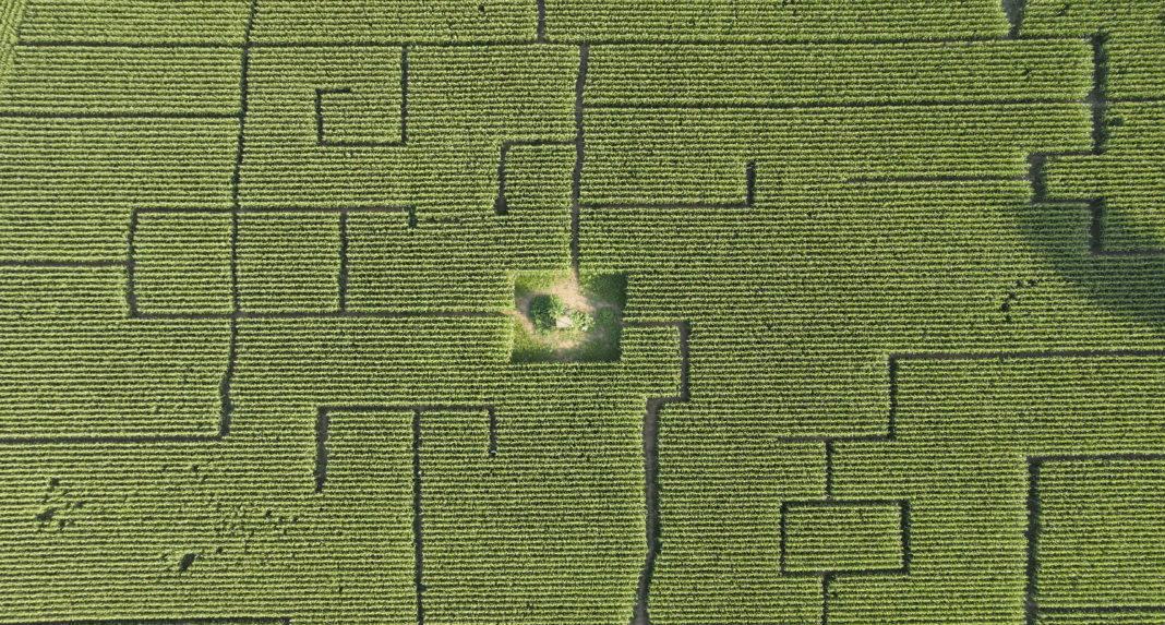Maislabyrinth Pfalz