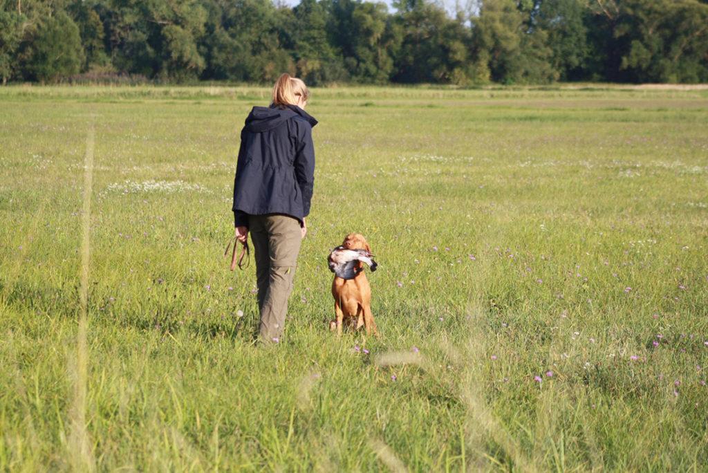 Isabell Pfeffer beim Hundetraining mit Jagdhund Anton (Foto: honorarfrei)