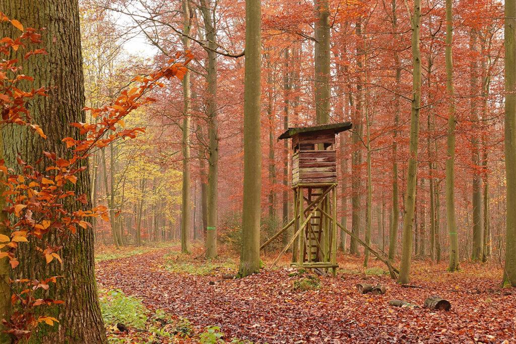 Im grünen Waldrevier (Foto: Pictavio/Pixabay)