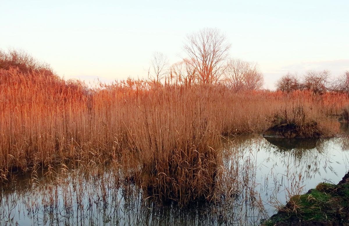 Solche Laichgewässer legt die Stiftung auf ihren Flächen an. (Foto: NVS)